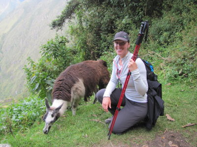 Hanging out with Llamas at Intipata