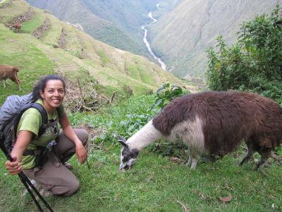 Llamas at Intipata