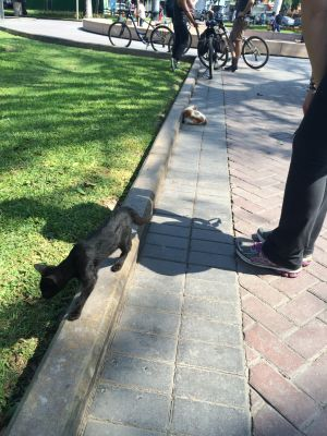 Stopping to play with the cats in Parque Kennedy