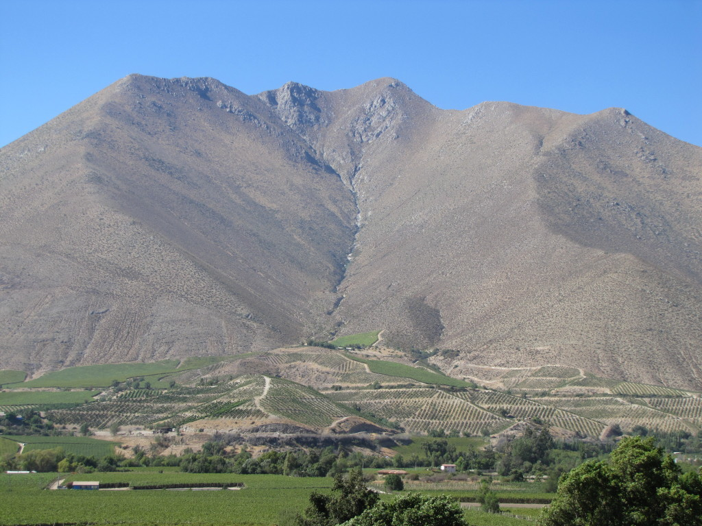 Vicuña vineyards