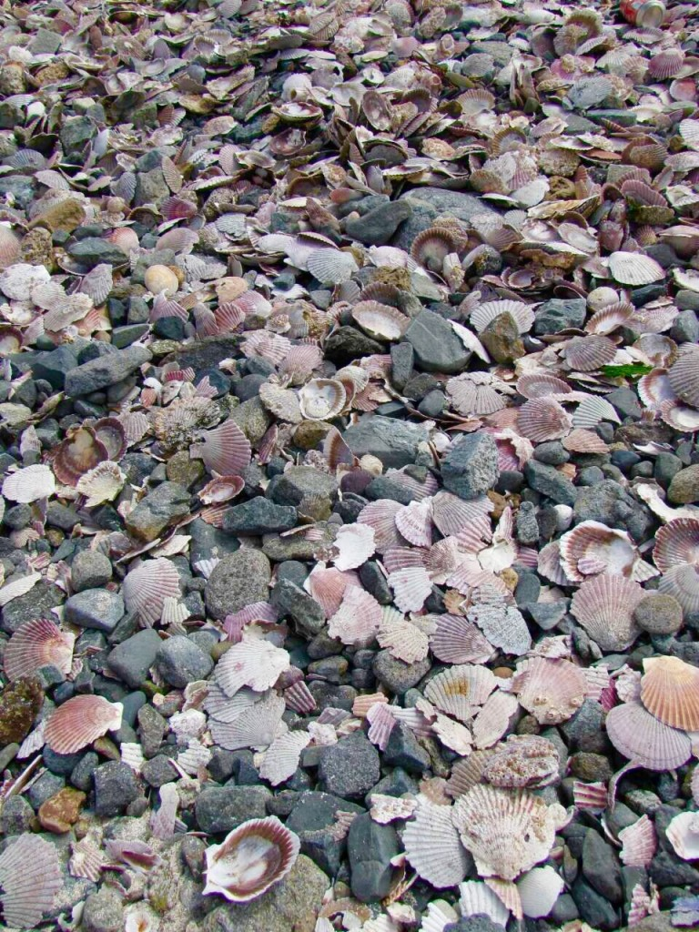 Bahía Inglesa seashells