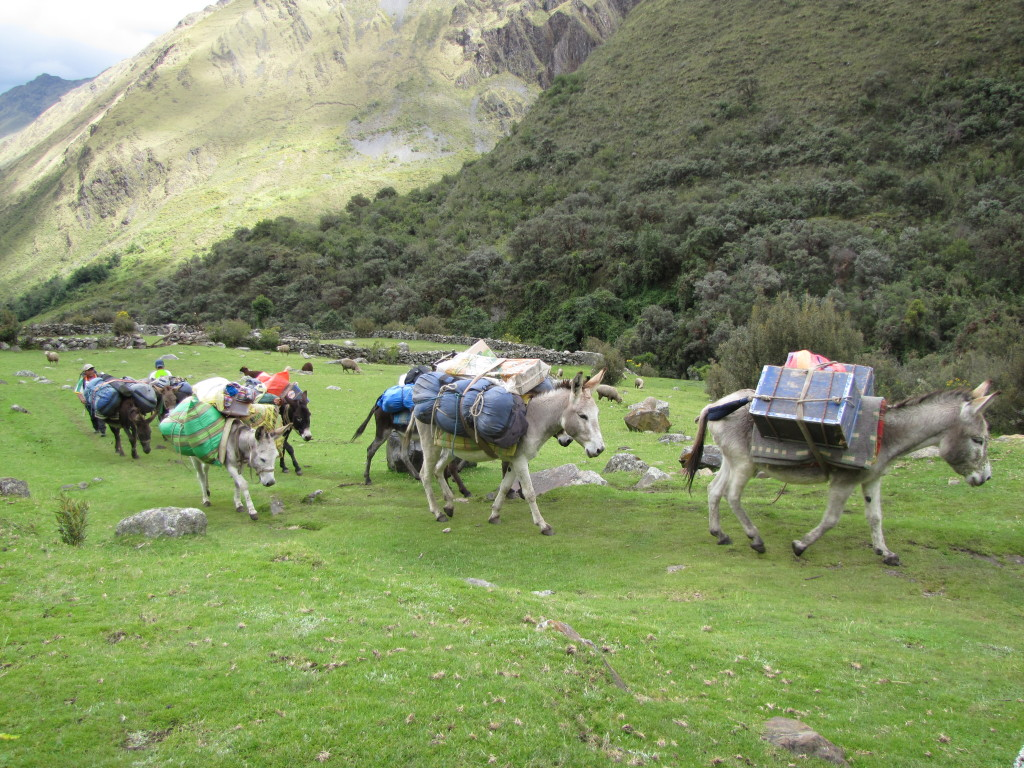 Donkeys carried our things this time instead of porters!